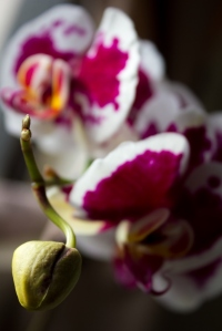New Bloom