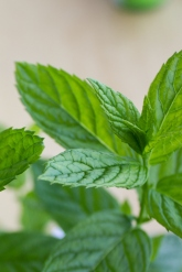 fresh peppermint on monstermonsterblog