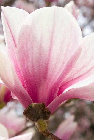 magnolia monstermonster
