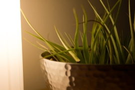 air plant hammered bowl monstermonster
