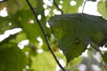 foliage monstermonster