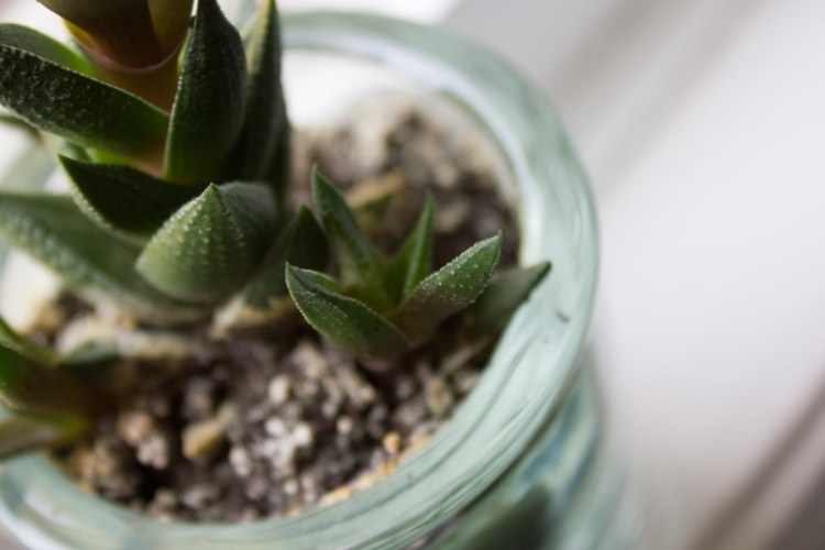 succulent on monstermonsterblog