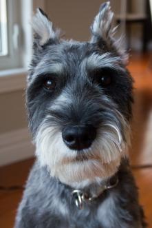 puppy cuteness monsteronster blog