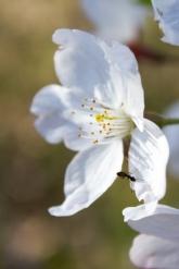 blossom2 @ high park