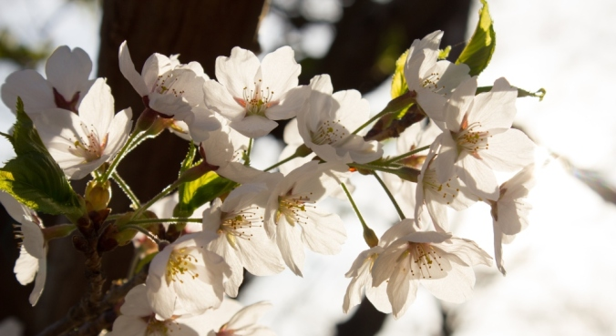blossom3 @ high park