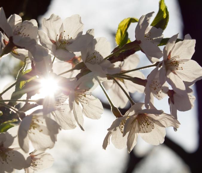 blossom5 @ high park