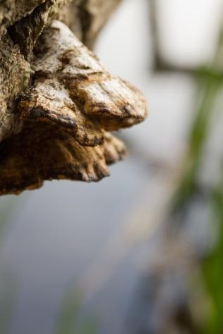 fungus high park monster monster