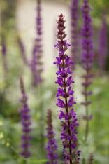 flower1JUL17