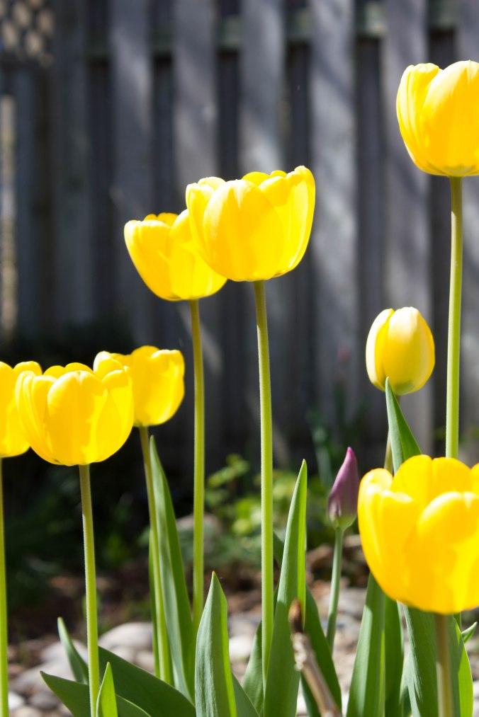 garden05KM052018